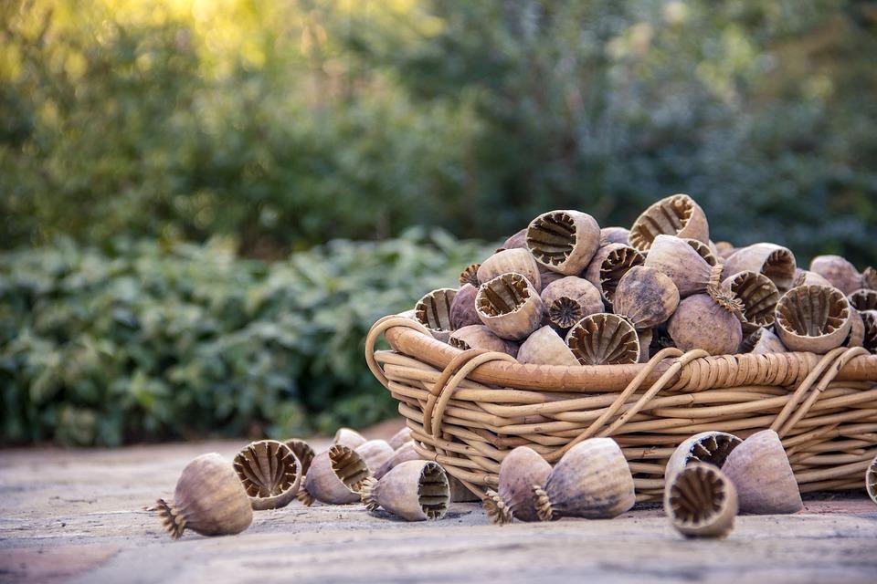 Poppyseed, Poppy, Seed, Nature, Opium, Herb, Plant