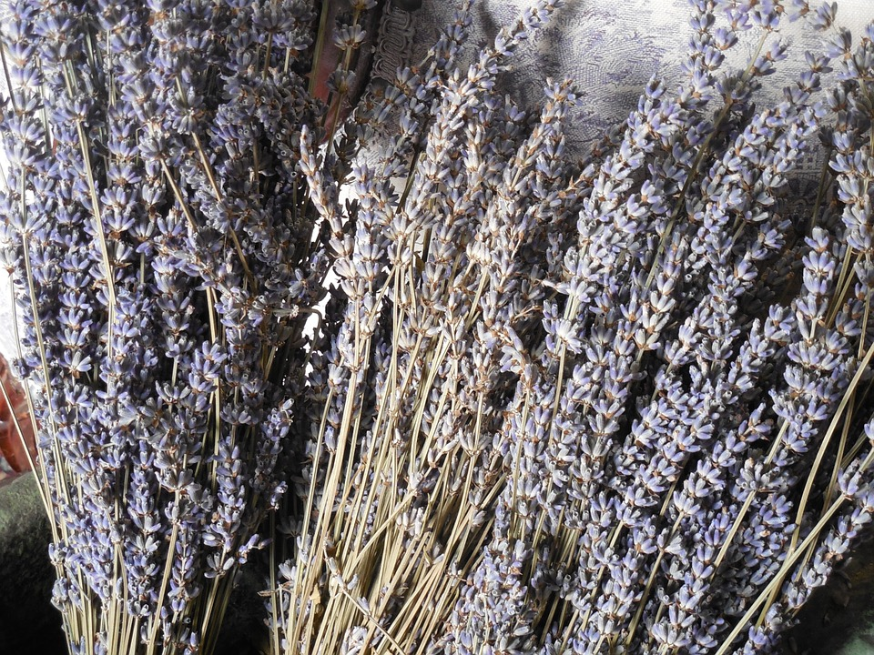 Lavender, Dried, Flower, Purple, Herb, Plant, Medicine