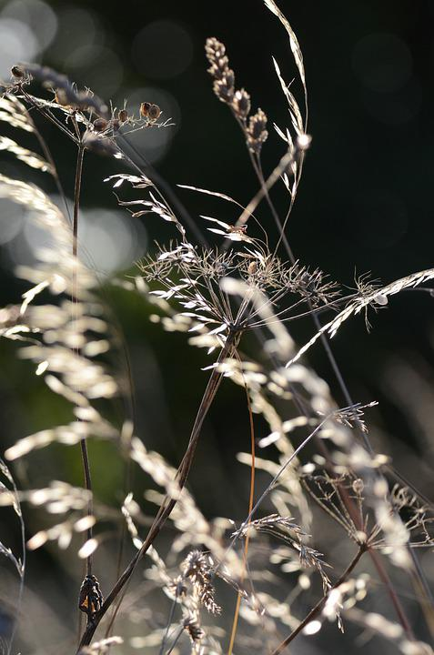 Herbs, Field, Prairie, Insect, Flora, Nature