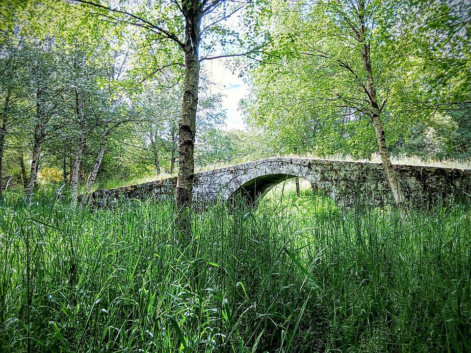 Bridge, Nature, Herbs, Ribeira Sacra, Galicia