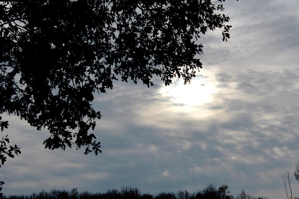 Herfstzonnetje, Cloud Cover, Leaves, Forest, Light