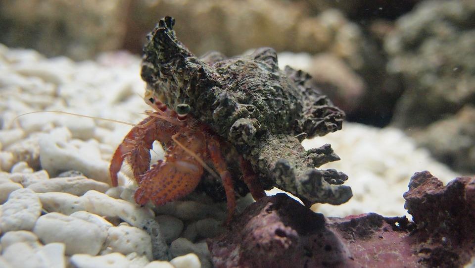Hermit Crab, Aquarium, Sea