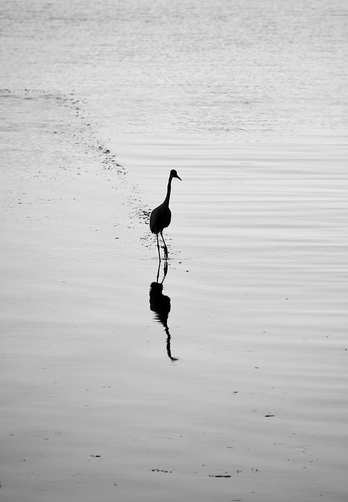 Water Bird, Heron, Bird, Water, Mirroring, Animal