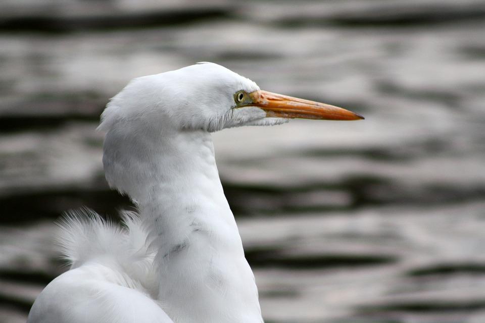 Heron, Peak, Lake, Ave, Flight