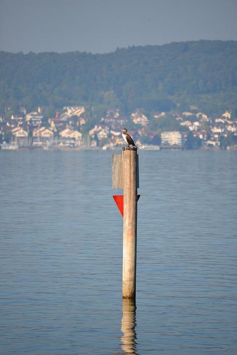 Heron, Bird, Lake Constance, Lake View, Lake, Water