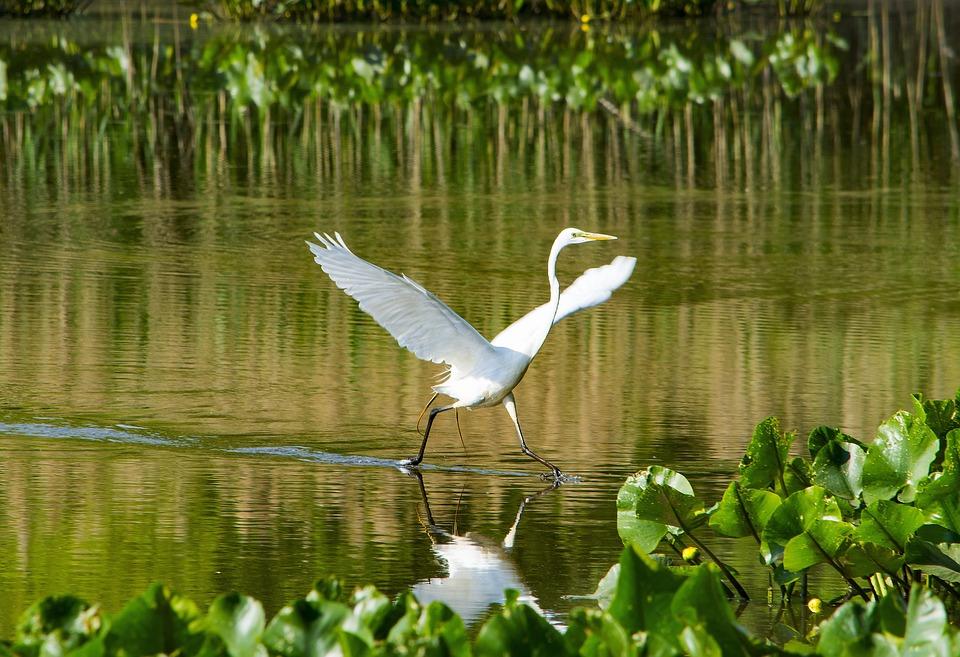 Heron, Bird, Waterfowl, Animal, Nature, Birdwatching