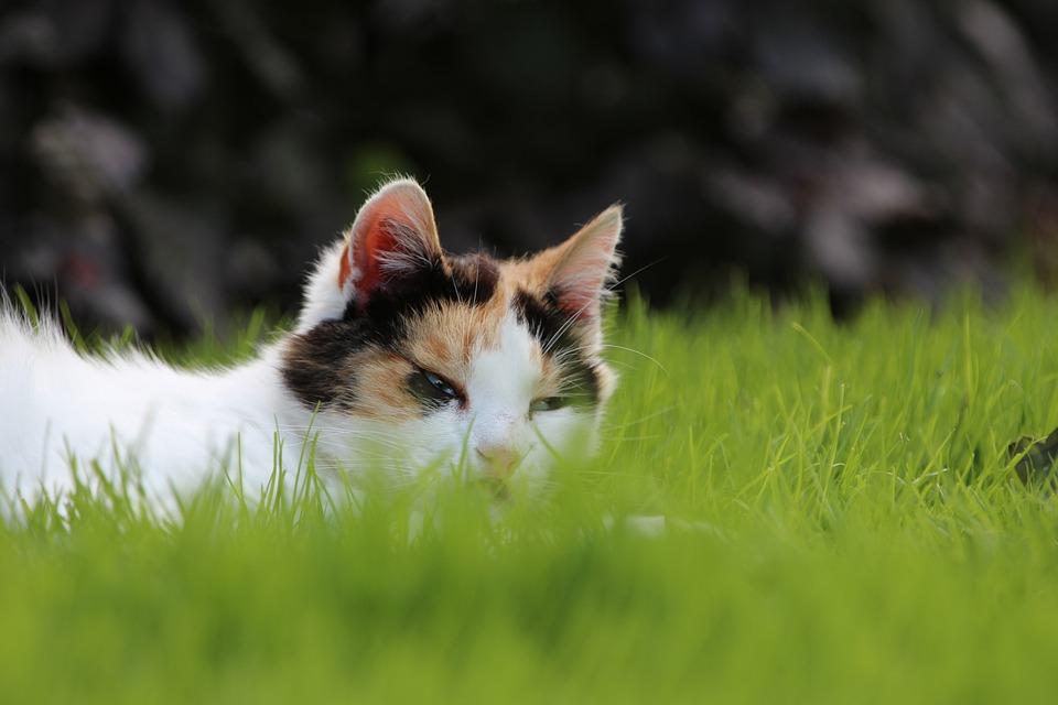 Cat, Grass, Relax, Animal, Green, Outdoor, Hide