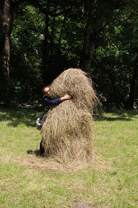 Haystack, Hay, Feed, Hide