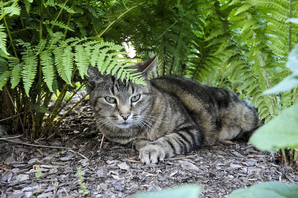 Cat, Hiding Place, Fern