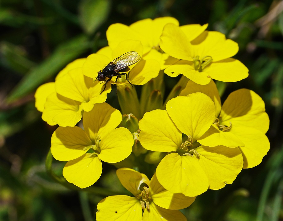 Free Photo High Position Alpine Fly Yellow Mountain Flowers Max Pixel
