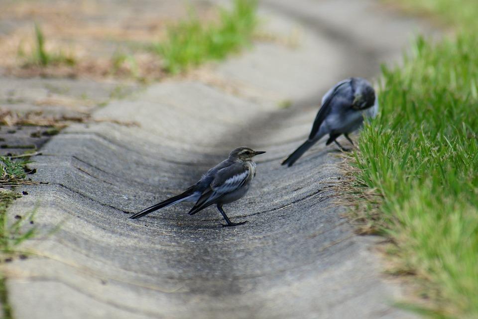 Animal, Plant, Grass, Little Bird, High Security Level
