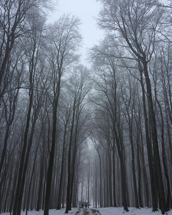 Trees, Winter, Snow, Forest, Nature, High