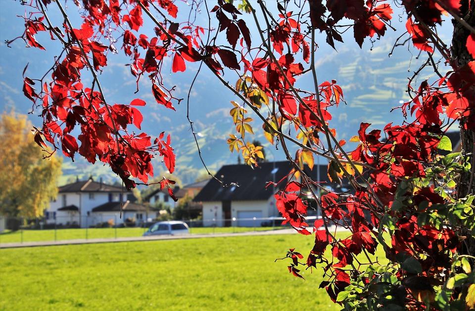 Foliage, Collapse, Autumn, Oct, Highlighted