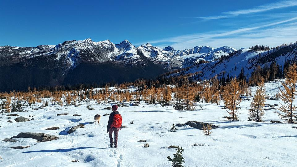 Nature, Larch, Trees, Snow, Hike, Backpack, Mountains