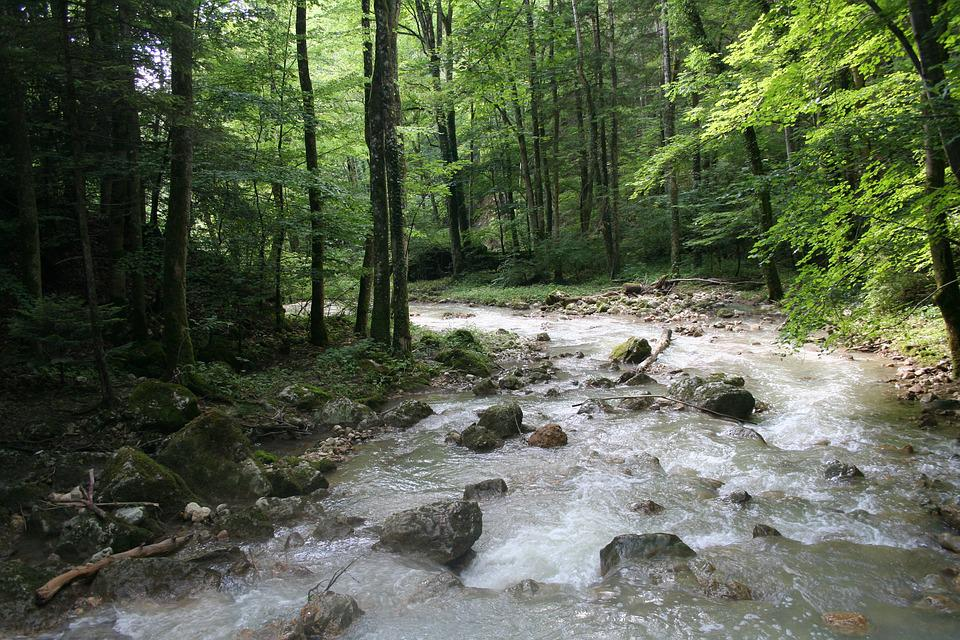 Forest, Switzerland, Idyll, Nature, Hiking, Trees