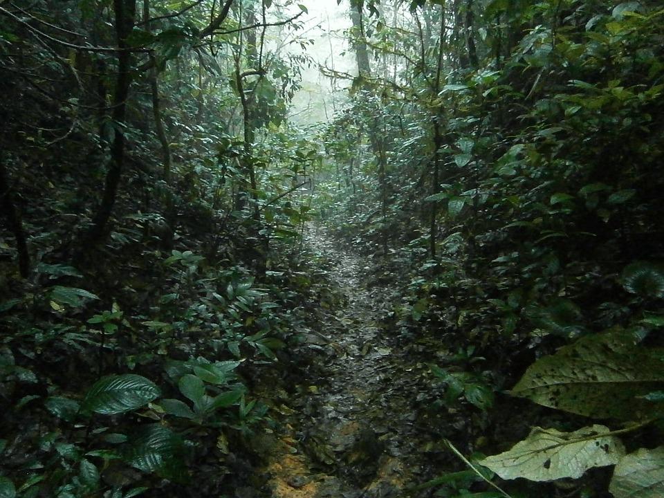 Jungle, Rain, Tropical, Trail, Hiking, Rainforest