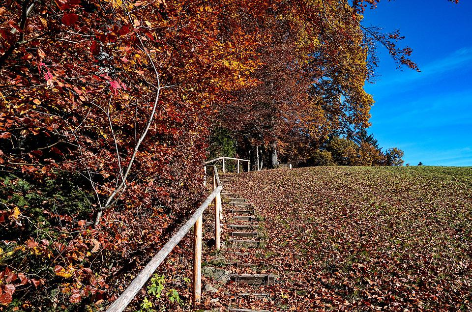Autumn, Staircase, Nature, Forest, Leaves, Hiking