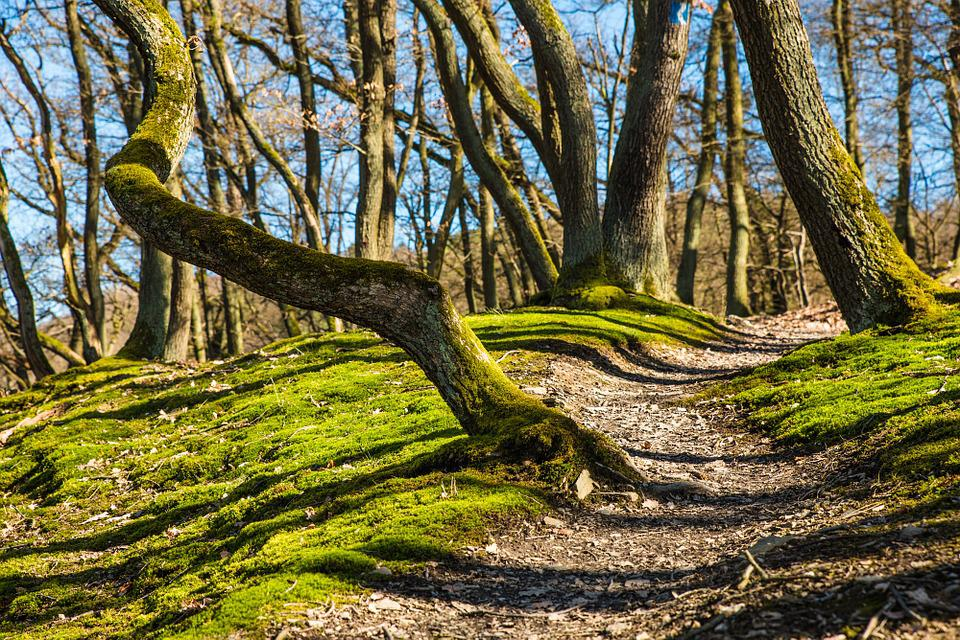 Forest, Hiking, Forest Path, Trail, Away, Path, Moss