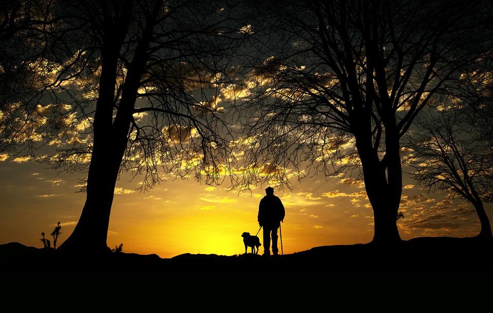 Sunset, Dog, Man, Walk, Silhouette, Nature, Hiking