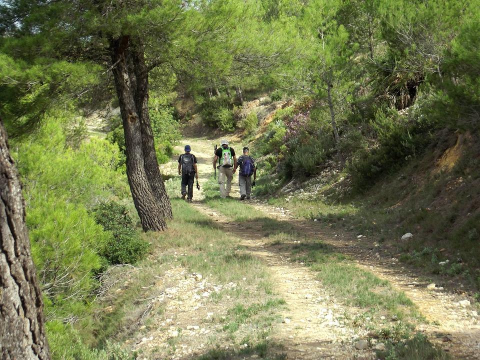 Mountain, Path, Walking, Outdoor, Hiking, Trail