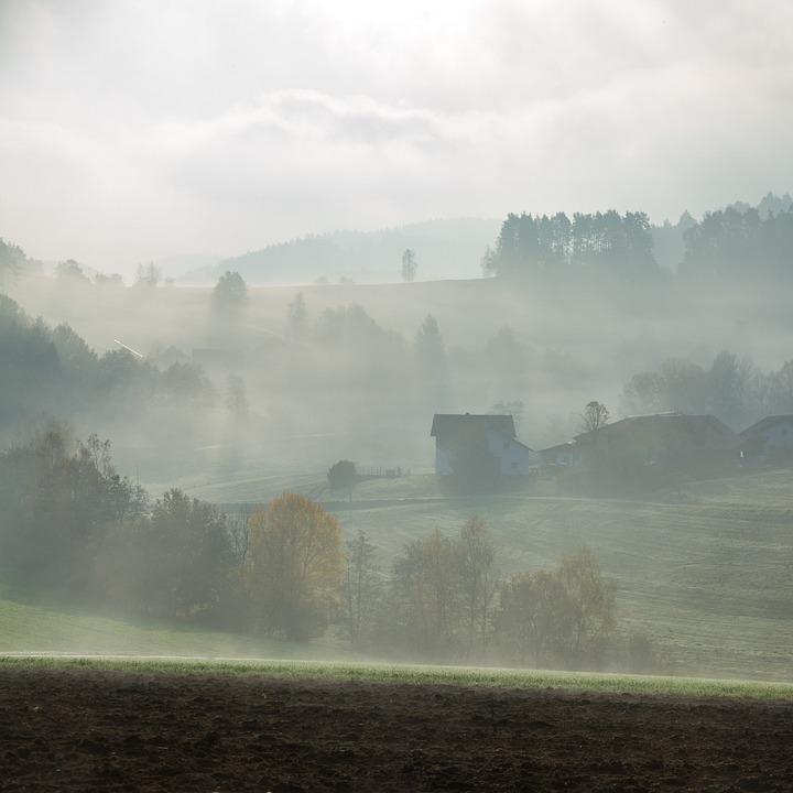 Fog, Landscape, Hill, Meadow, Fog Bank, Morning, Forest