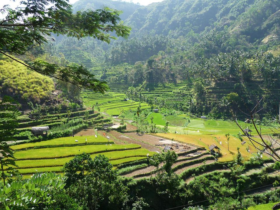 Indonesia, Rice, Hill