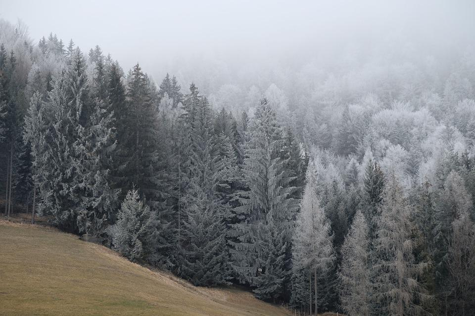 Forest, Trees, Conifers, Hills, Coniferous