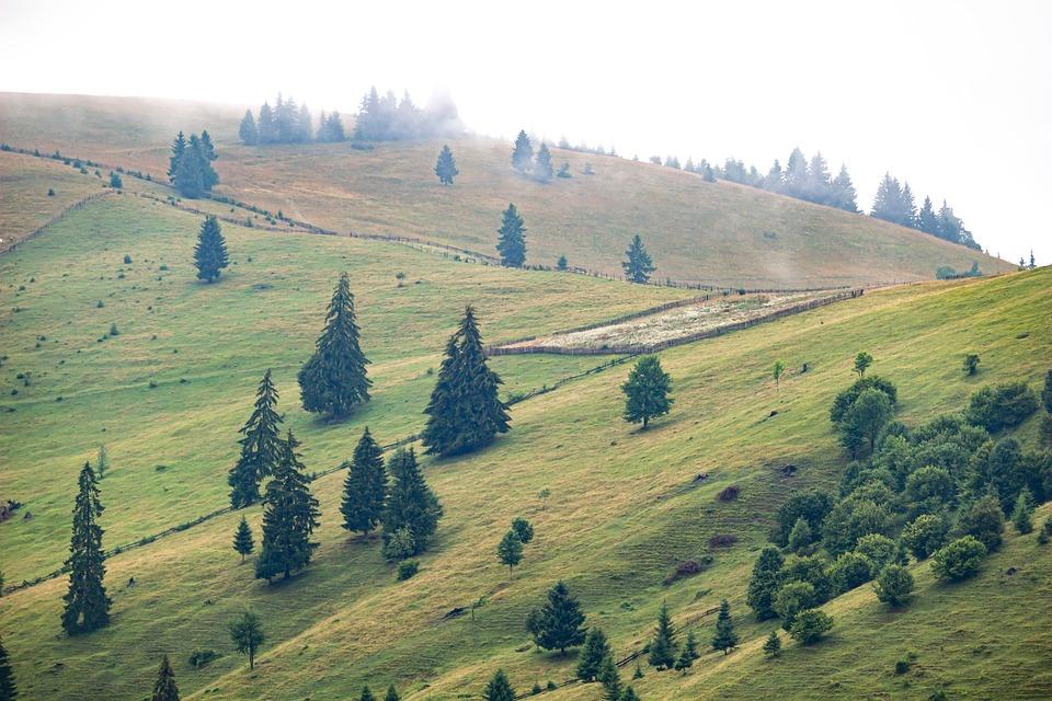 Hills, Trees, Grass, Grasslands, Nature, Landscape