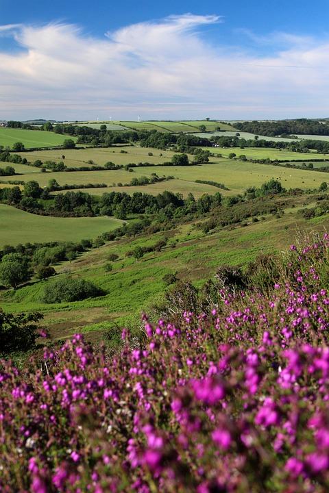 Flowers, Heather, Hills, Moorland, Grass, Summer