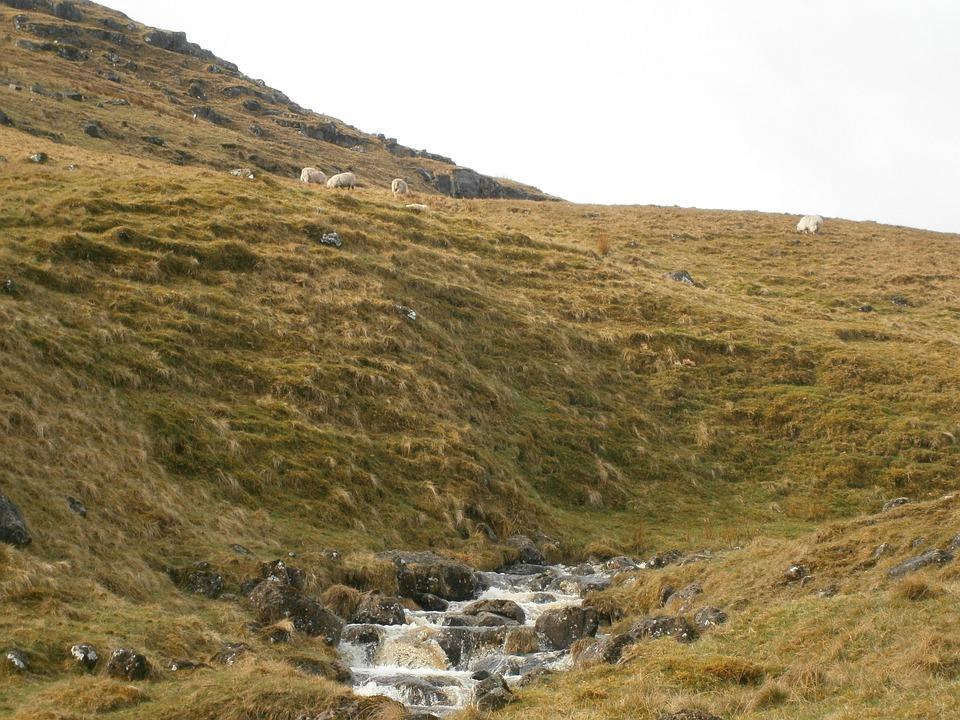 Stream, Hills, Sheep, Landscape, Wilderness, Scenery