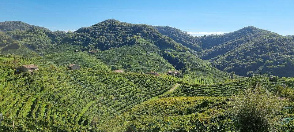 Vineyards, Hills, Valdobbiadene, Italy, Plantation