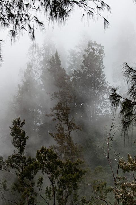 Landscape, Forest, Fog, Tambora Mountain, Hillside