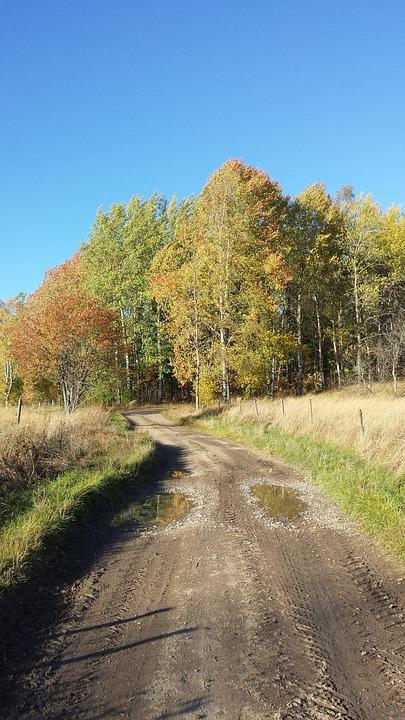 Autumn, Time Of Year, Road, Tree, Himmel