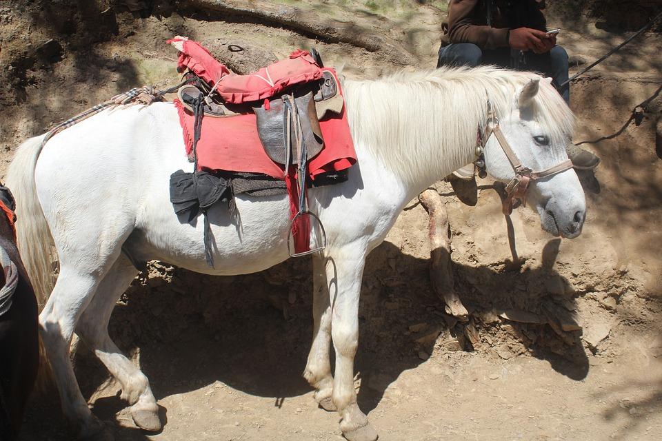 Mule, Pony, Hinny