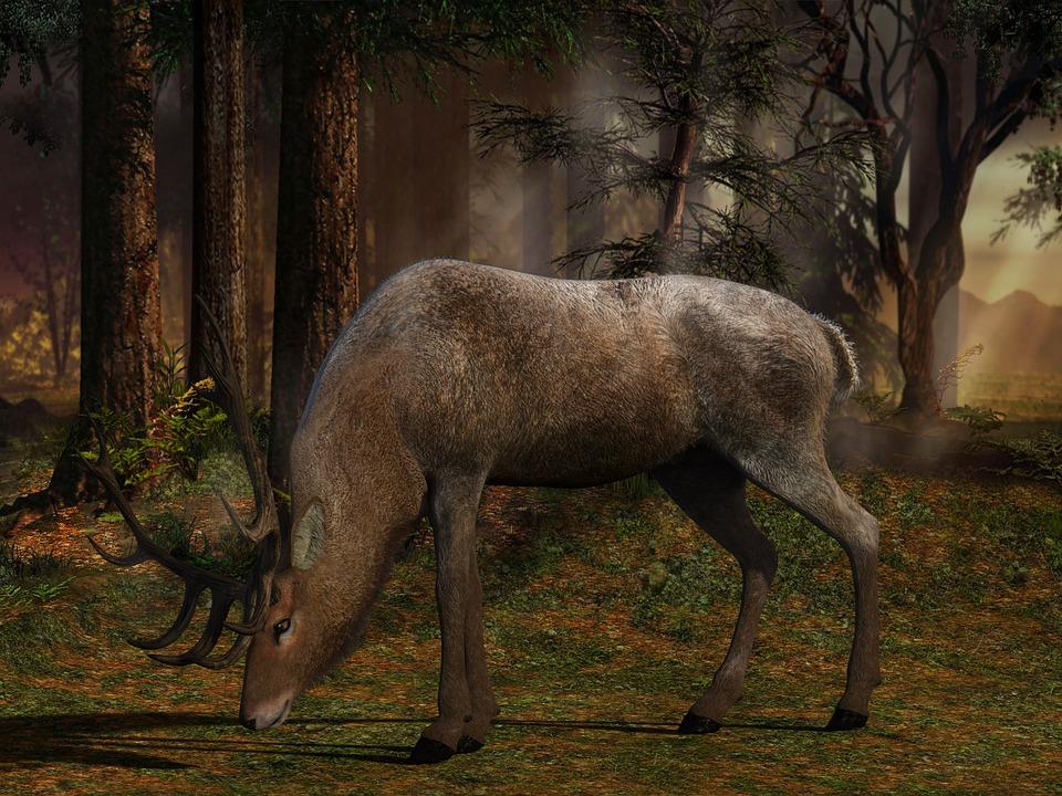 Mammal, Nature, Wood, Tree, Waters, Hirsch