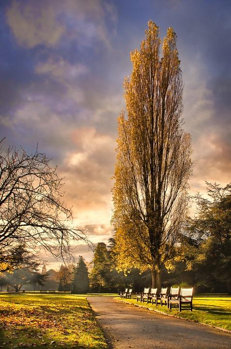 Chester, Park, Autumn, High Dynamic Range, Historic