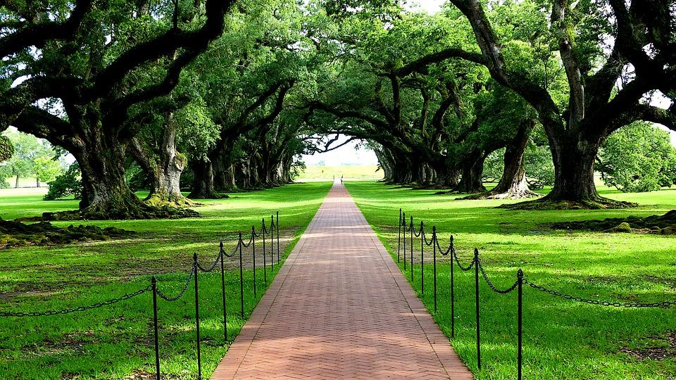Path, Park, Oak, Trees, Pathway, Plantation, Historic