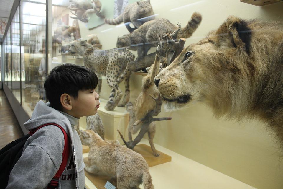 Boy, Museum, Leo, Predator, Historically, Tourism