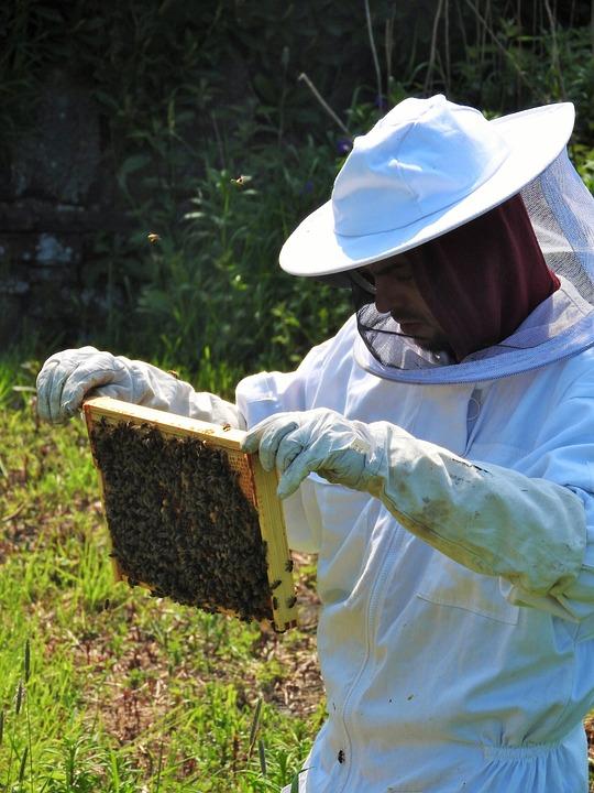 Beekeeper, Apiarist, Beehive, Honey, Hive, Apiary