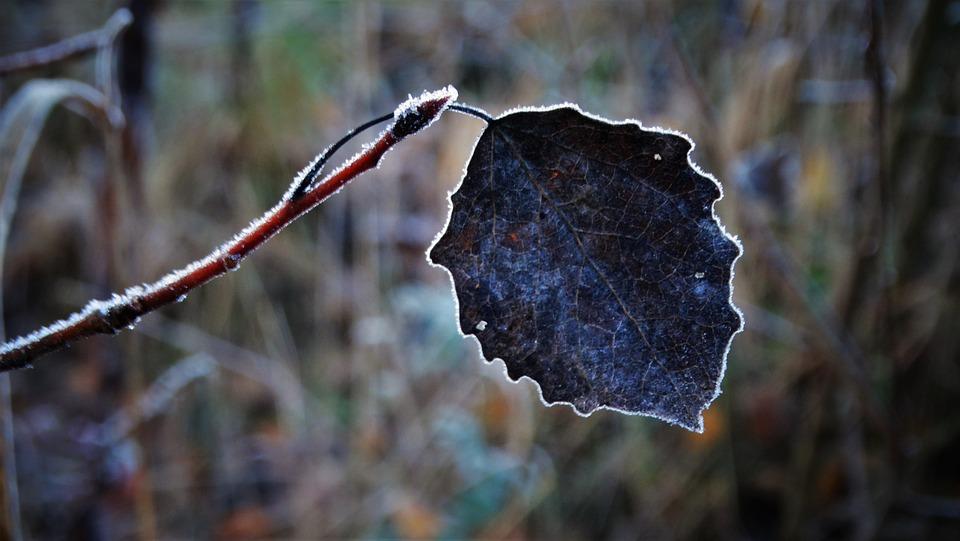 Leaf, Branch, Frost, Hoarfrost, Frozen, Ice, Winter
