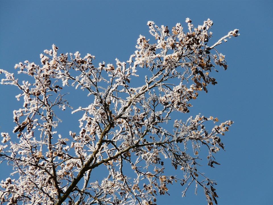 Hoarfrost, Winter, Cold, Tree, Branch