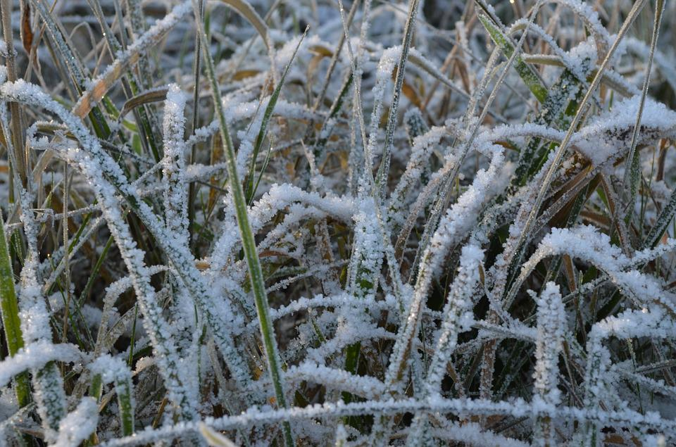 Grass, Frost, Ripe, Winter, Cold, Nature, Hoarfrost