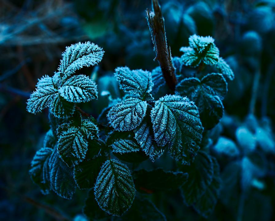 Hoarfrost, Ripe, Winter, Frost, Frozen, Nature, Cold