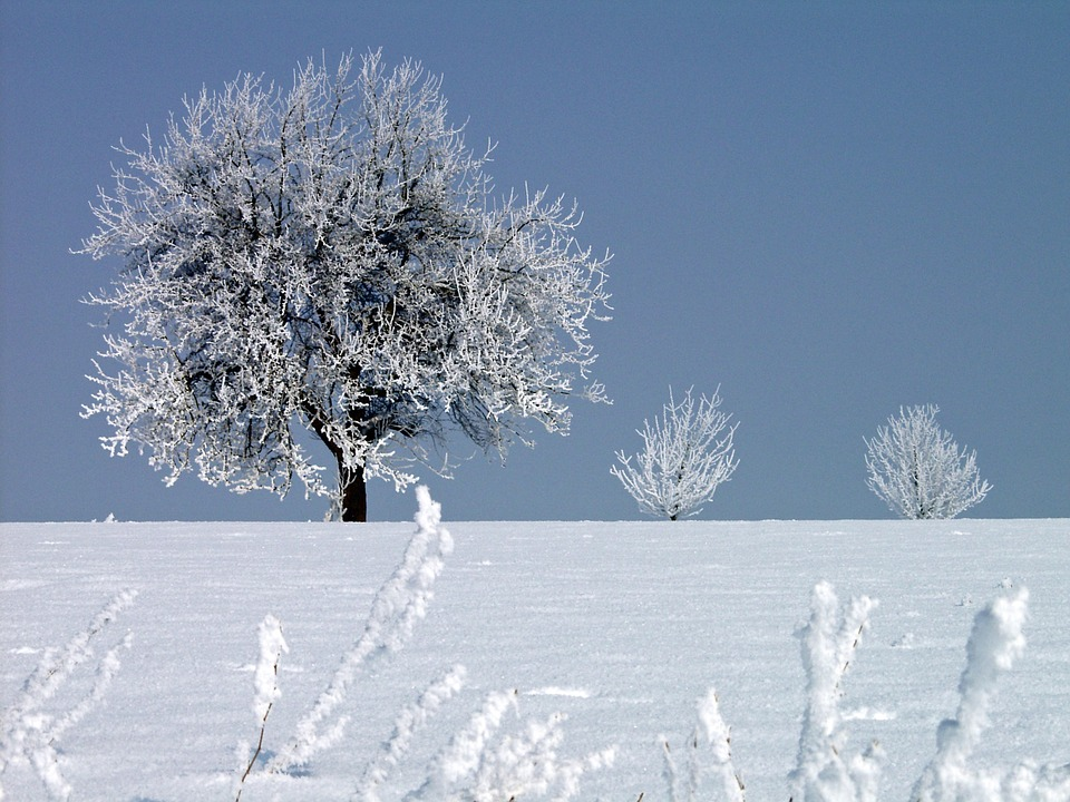 Hoarfrost, Winter, Cold, Tree, Wintry