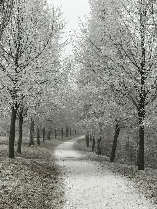 Away, Wintry, Trees, Hoarfrost, Odenwald, Bensheim