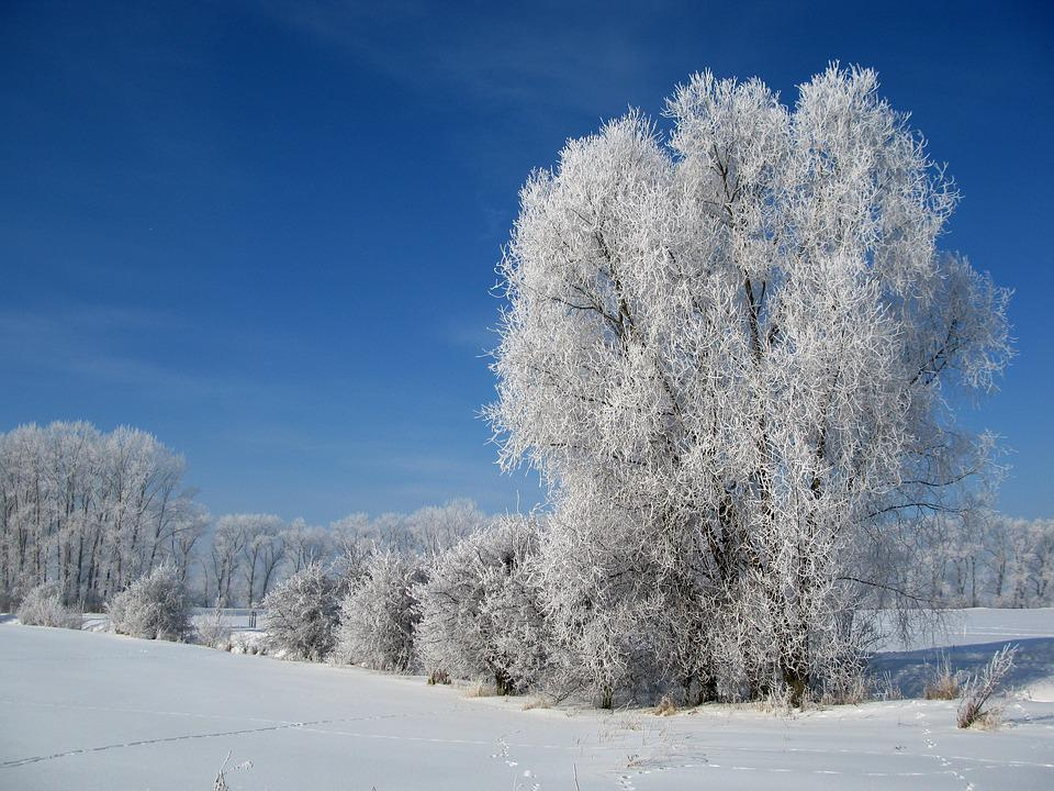 Hoarfrost, Winter, Cold, Frost, Clear