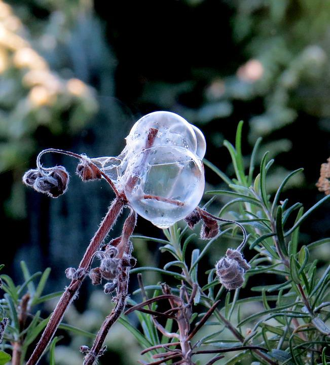 Soap Bubbles, Frost, Winter, White, Hoarfrost, Wintry
