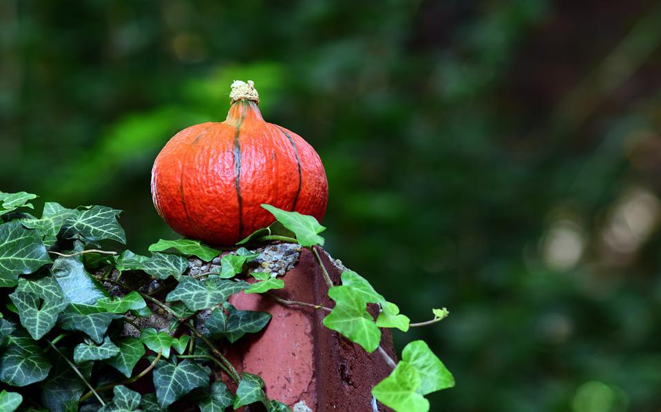 Pumpkin, Hokkaido, Orange, Vegetables, Hokkaidokürbis