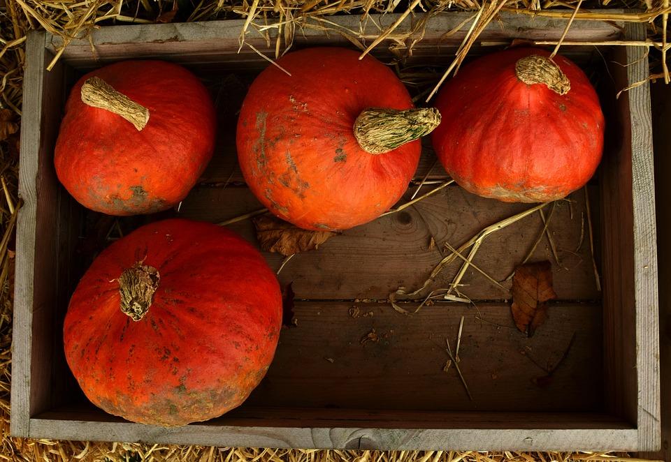 Pumpkin, Hokkaido, Hokkaido Pumpkin, Autumn, Halloween