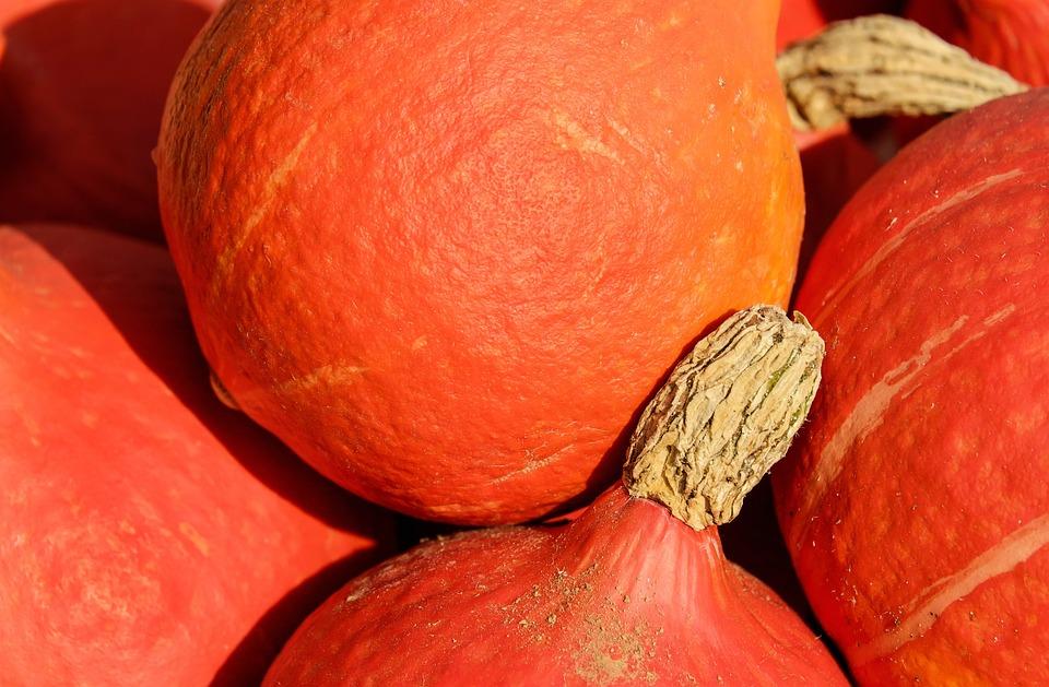 Pumpkin, Hokkaidokürbis, Fruit, Orange, Harvest, Nature